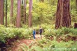 10. Redwood Nationalpark